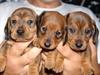 Pups_002